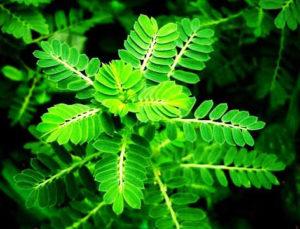 Những bài thuốc trị nóng trong người hiệu quả từ những cây cỏ dễ kiếm